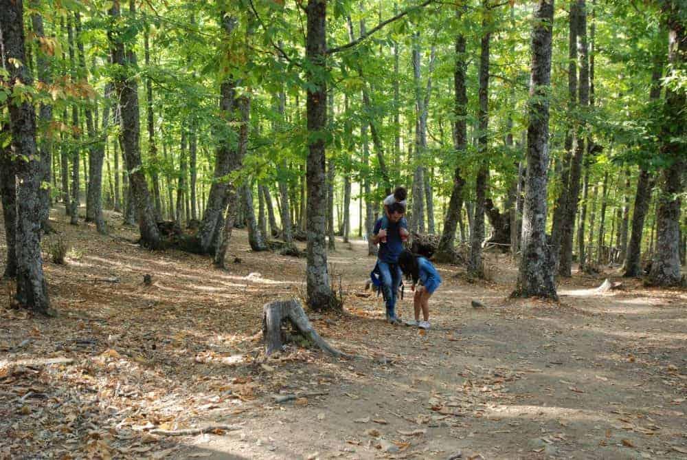 Familia paseando por el bosque