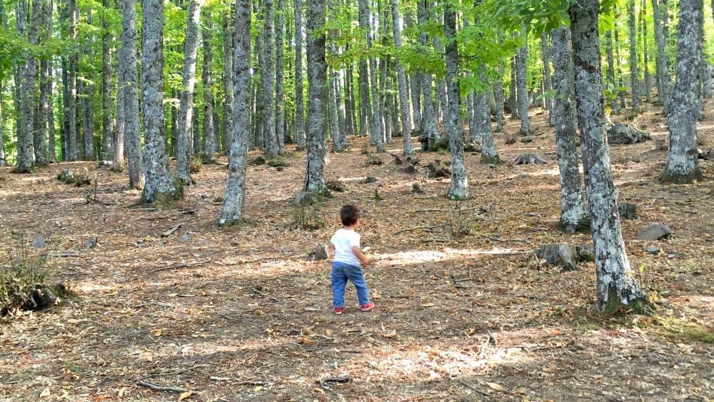 Niño andando por el castañar de El Tiemblo