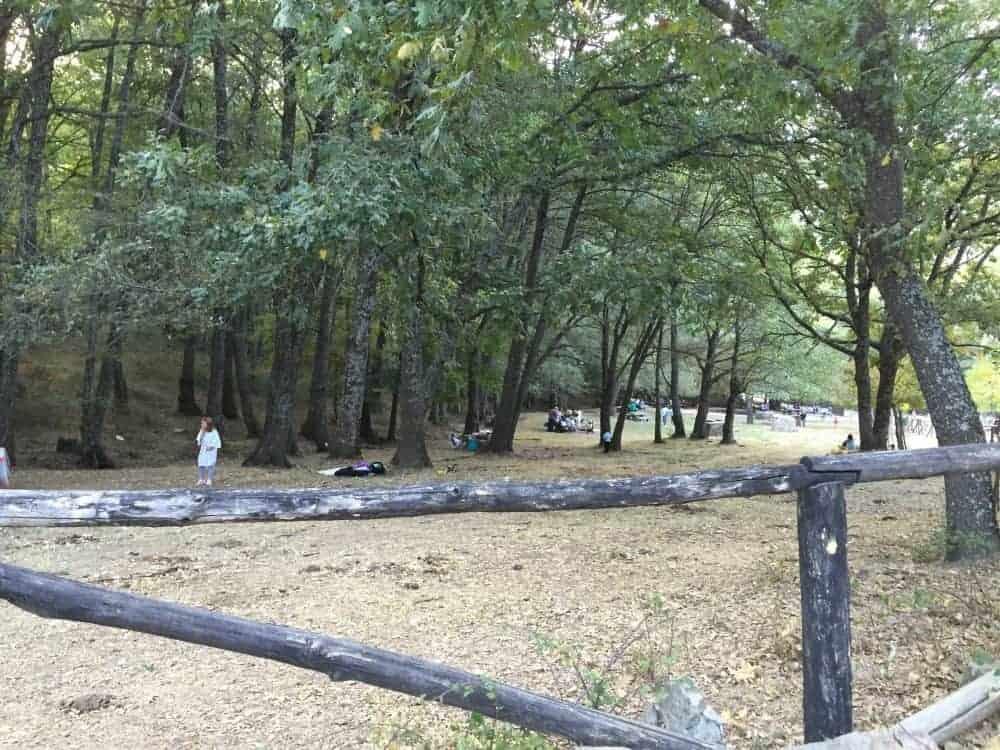 Zona de picnic en el castañar de El Tiemblo