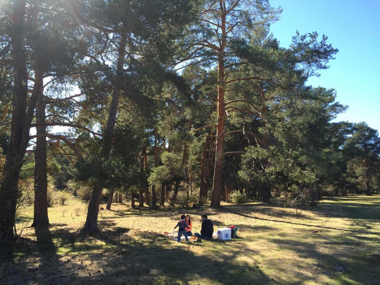Haciendo picnic en un bosque