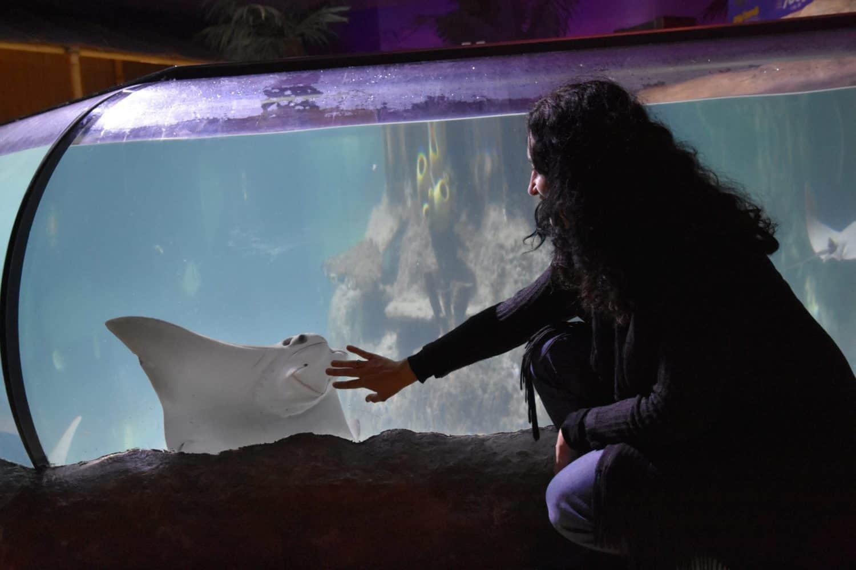 En Sea Life Porto tienen muchas rayas, cuidando especialmente esta especie