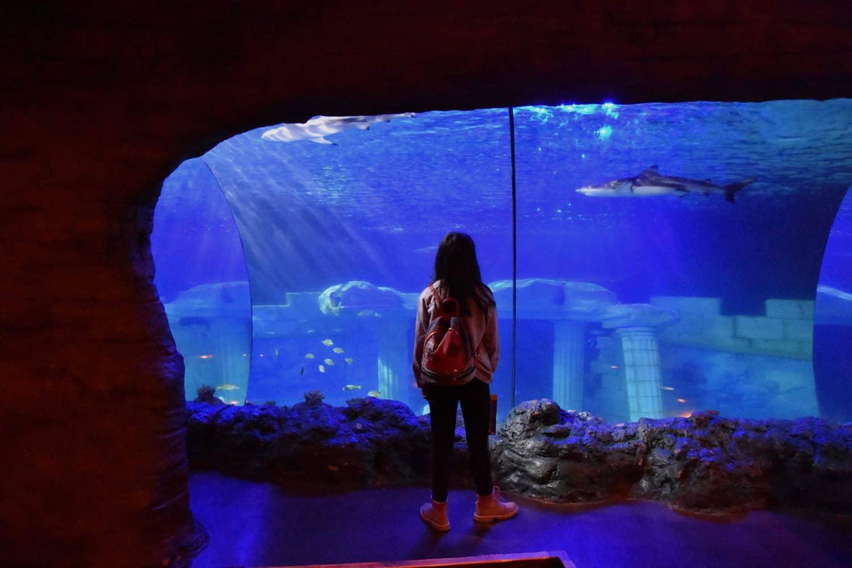 Sea Life Porto es uno de los lugares que ver en Oporto si vas con niños