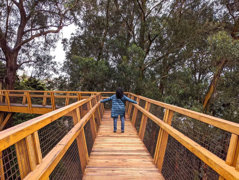 TreeTop Walk Serralves, tiene que estar entre tu lista de qué ver en Oporto