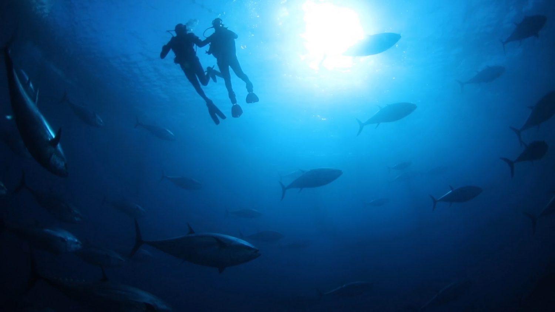 Nadar entre atunes rojos, una actividad impresionante para hacer con niños